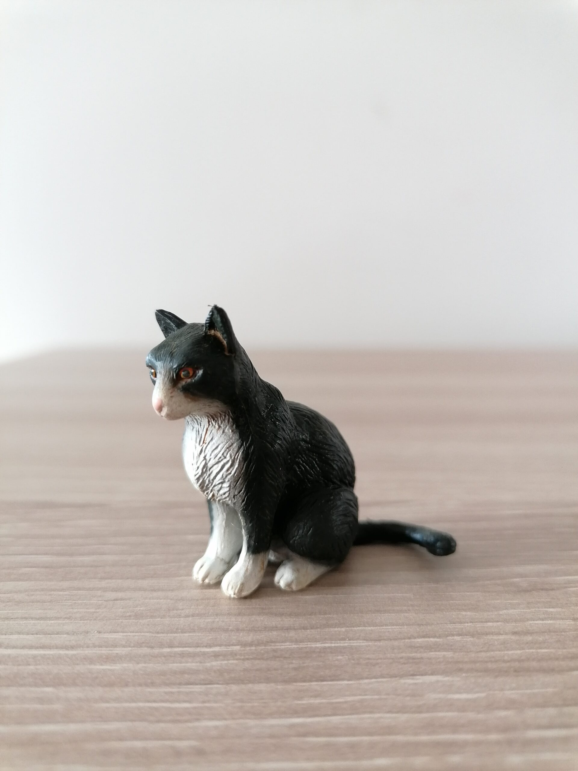 Must kass – istuv