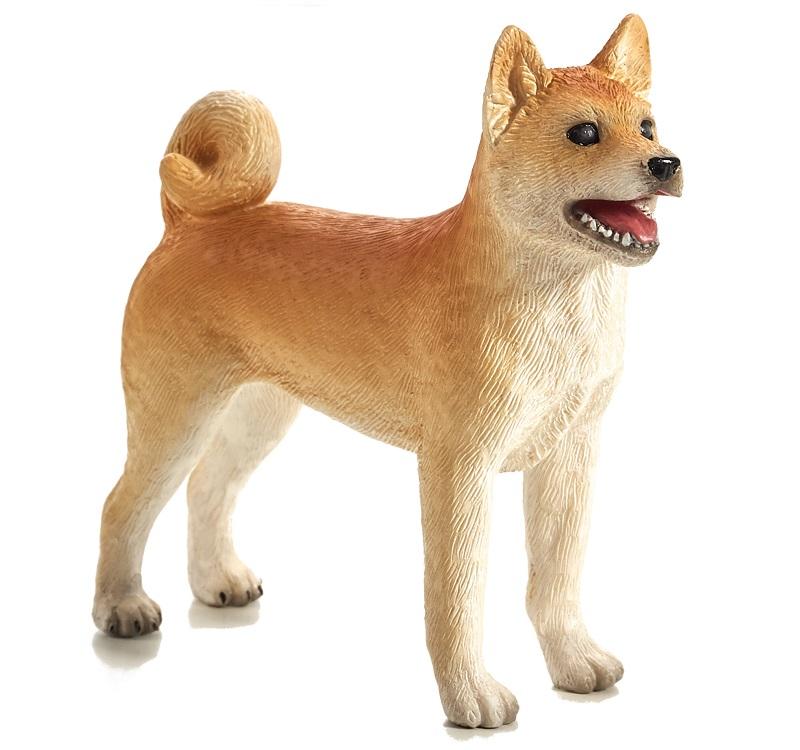 Shiba inu koer