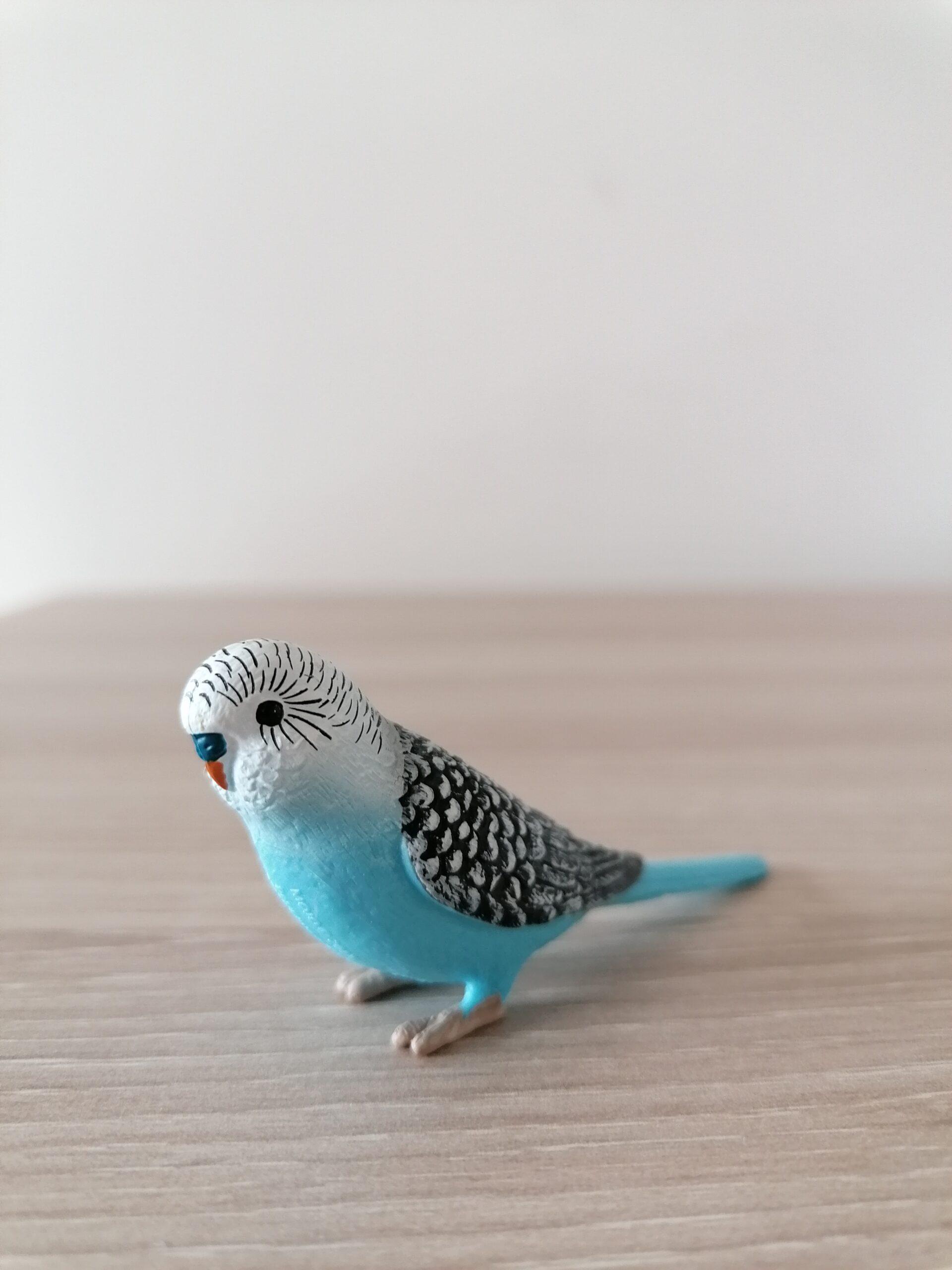 Sinine viirpapagoi – LH (1)