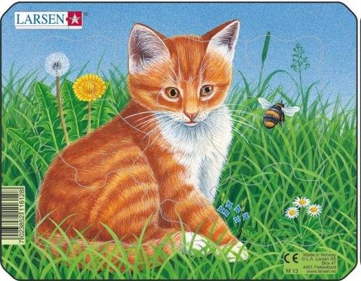 punane kass – M13